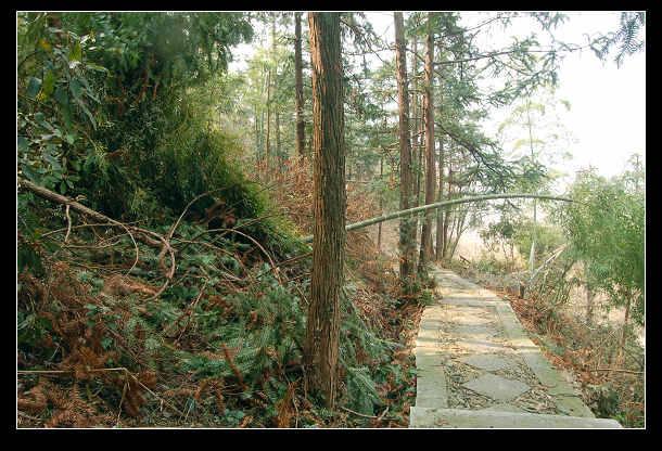 故事 石道/从指示牌右方前行数十米,便有上山石道,铺设整齐,虽蜿蜒曲折...